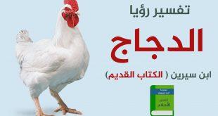 صور تفسير حلم الدجاجة البيضاء , الدجاج الابيض في المنام