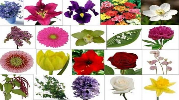 صورة انواع الازهار بالصور , الزهور مصدر الحب والعشق تعرف عليها