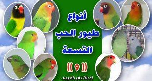 صور انواع طيور الحب بالصور , ما هي طيور الحب