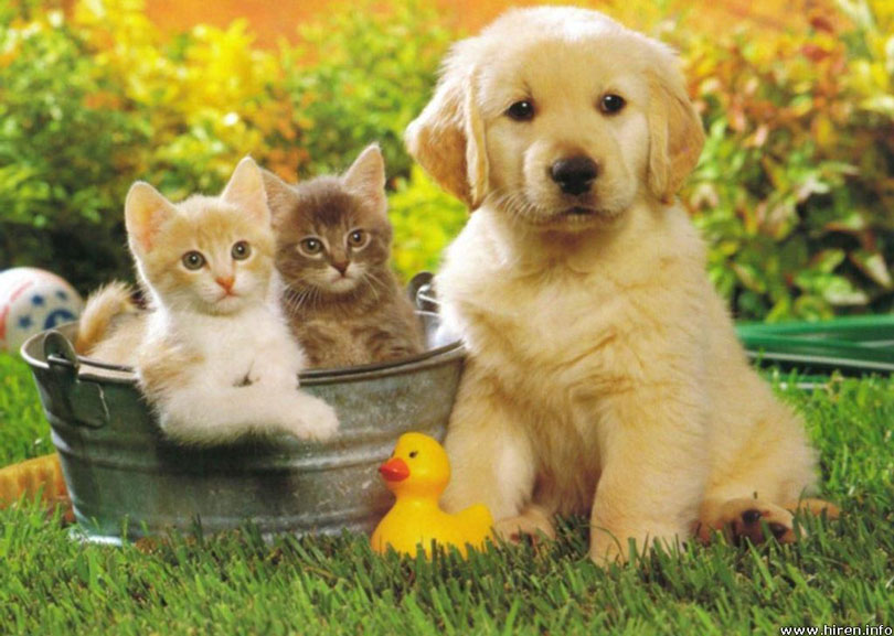 صورة صور حيوانات جميله , اجمل حيوانات رائعة روعة