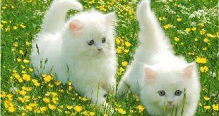 صور صور حيوانات جميله , اجمل حيوانات رائعة روعة