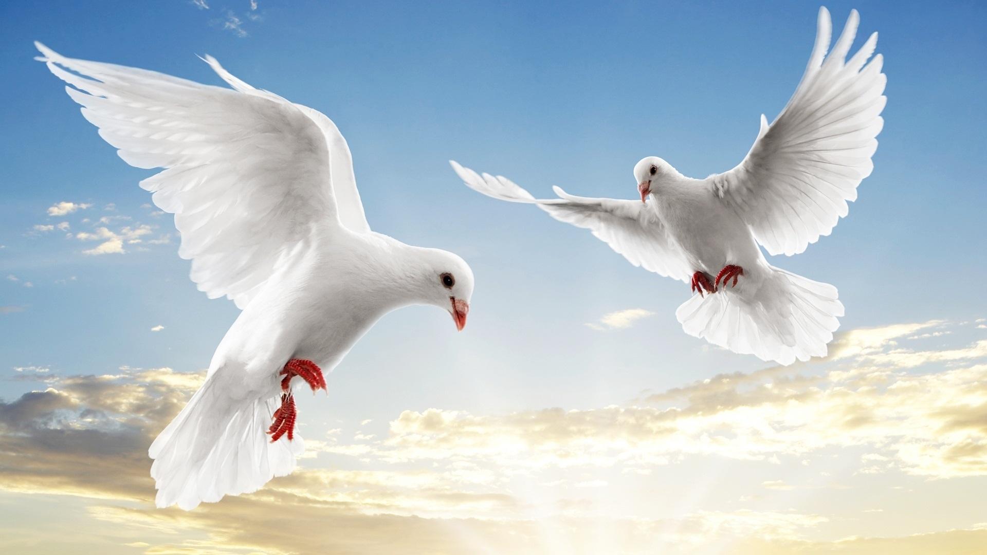 صور شعر حول السلم والسلام , اهميه الامن والامان في الحياه
