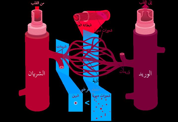 صورة بحث حول الدم , مقالة عن الدم