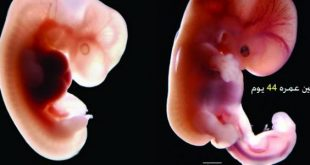 صورة الحمل فى الشهر الاول , شكل الجنين والتغييرات على الام في اول شهر