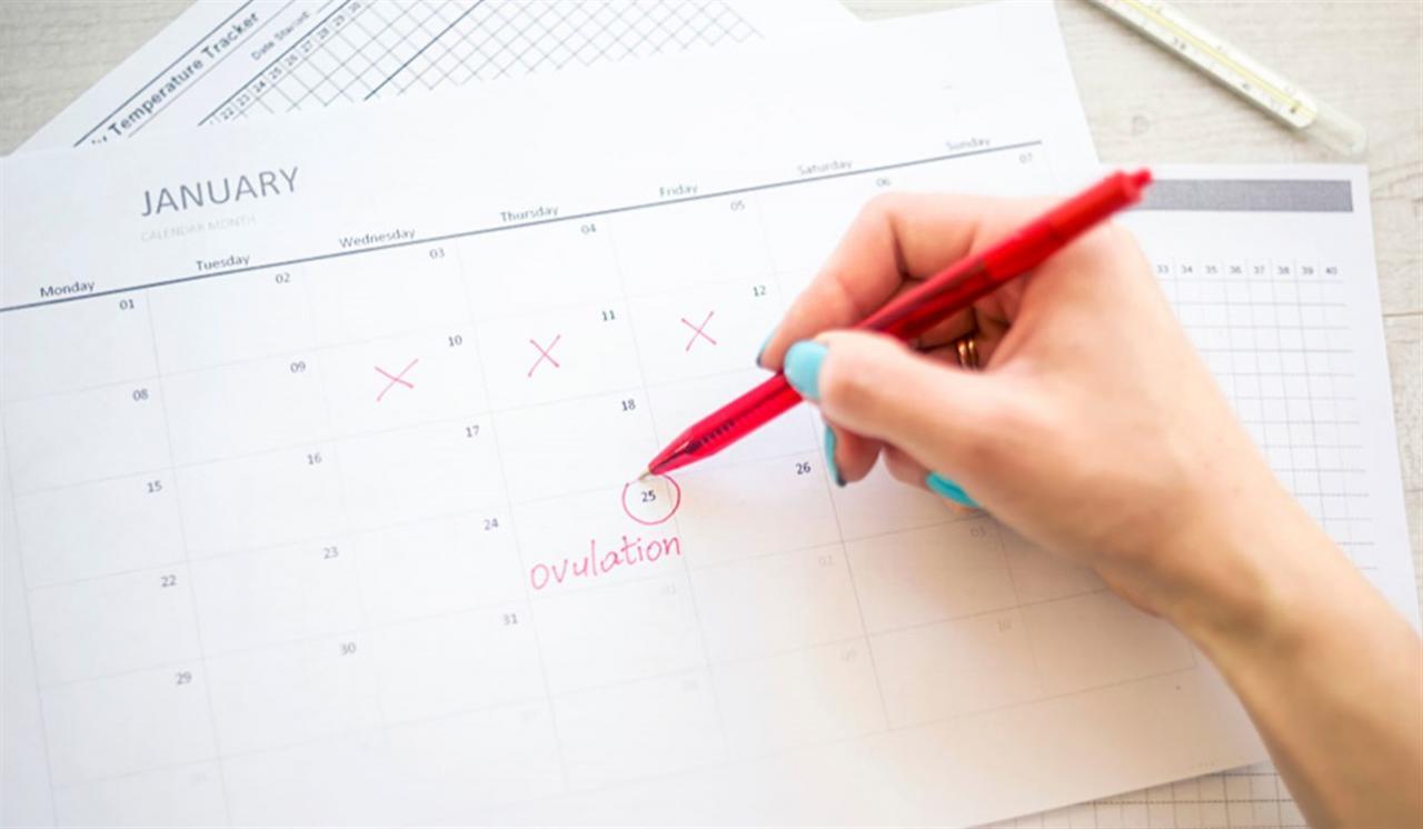 صورة معرفة ايام التبويض لحدوث الحمل , ايام معينة التبويض لحدوث حمل