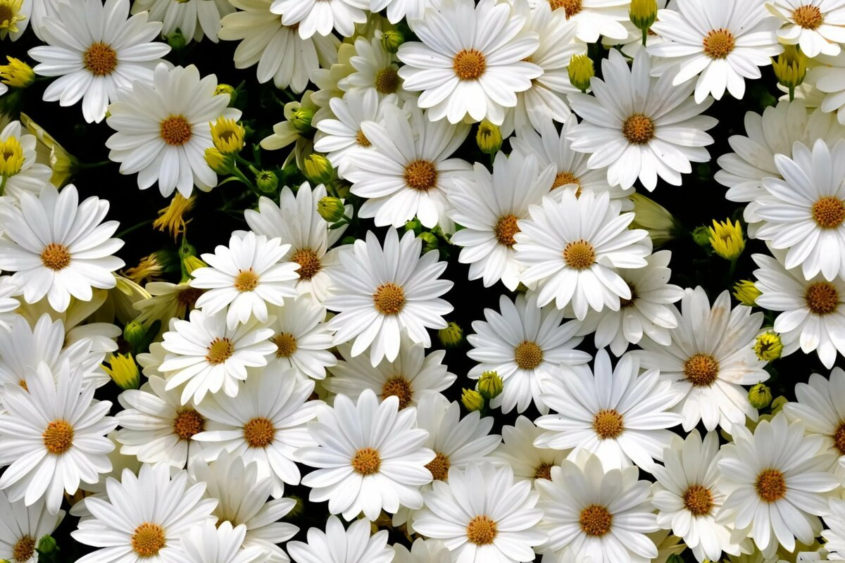 صورة الورد الابيض في المنام للعزباء , من الاحلام الغريبة الجميله