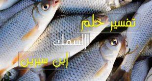 صورة تفسير رؤيا السمك , هل هو رزق كبير