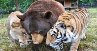 صورة رؤية الحيوانات في المنام , من الاحلام التي تكن غير متوقعه