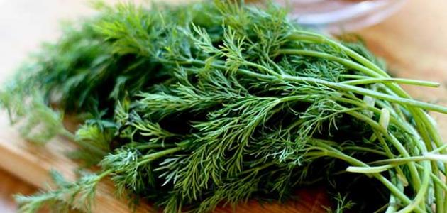 صورة ما هو البسباس , نبات طبى له علاجات مذهله جدا منذ القدم