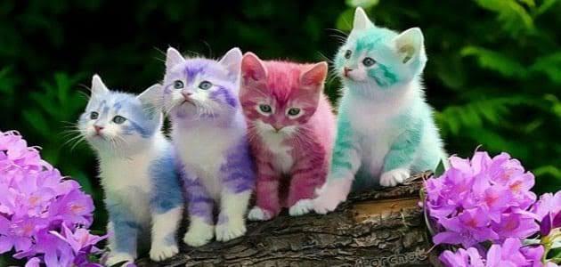 صورة تفسير رؤية القطط الصغيرة في المنام , هذا الحيوان الاليف ماذا يعنى 799 2