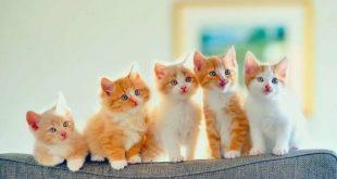 صورة تفسير رؤية القطط الصغيرة في المنام , هذا الحيوان الاليف ماذا يعنى