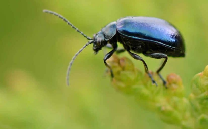 صورة الحشرات في المنام , ماتفسير هذه الرؤيه المزعجه
