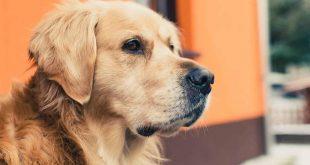 صورة تفسير الاحلام عن الكلاب , رايت انى استند على كلب فى حلمى