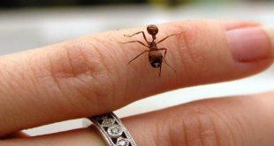 صورة علاج قرصة النمل , فى دقائق تخلصى منها ومن مضاعفاتها