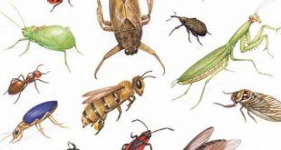 صورة معلومات عن الحشرات , اول مره اعرف المعلومات دى ازاى