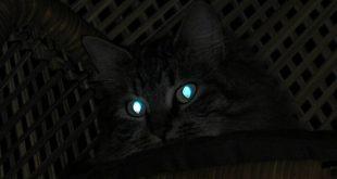 صورة لماذا عيون القطط تلمع في الليل , هاخد بالى بعد كده بالليل بالذات