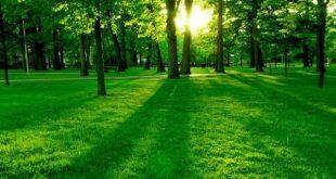 صورة تفسير حلم الارض الخضراء 5060 1 310x165